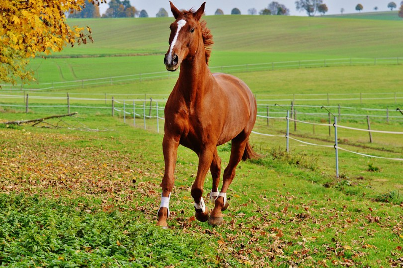 horse-1006378_960_720